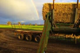 Travailler en ferme en Australie. Bon moyen d'économiser de l'argent