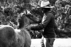 Travailler dans un ranch en Australie