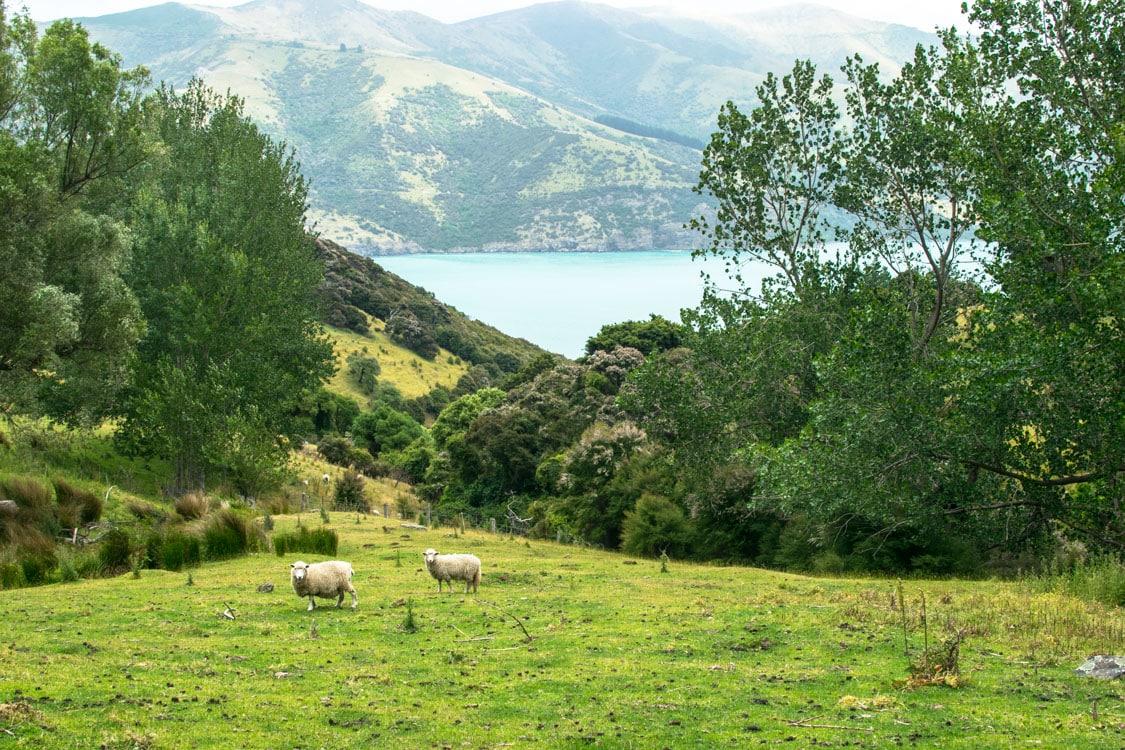 péninsule d'Akaroa aux environs de Christchurch