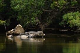 Les animaux d'Australie : découvrir la faune australienne