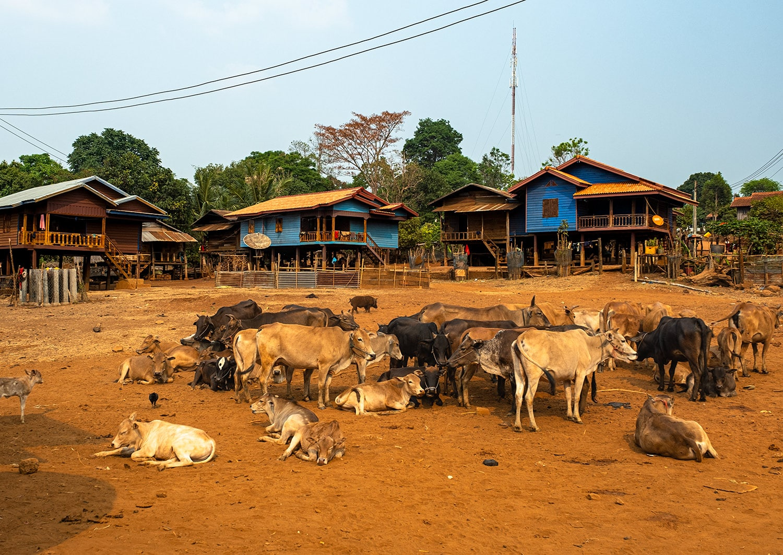 Village ethnique du plateau des Boloven au Laos avant le retour de voyage anticipé à cause du Coronavirus