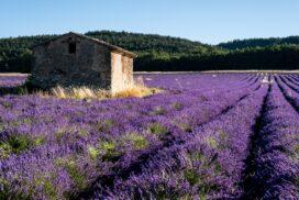 Visiter le Luberon et les beaux villages de Provence