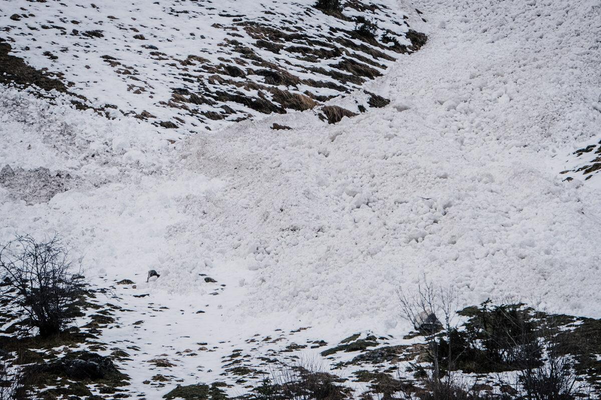 Avalanche dans le Val d'Azun Hautes Pyrénées