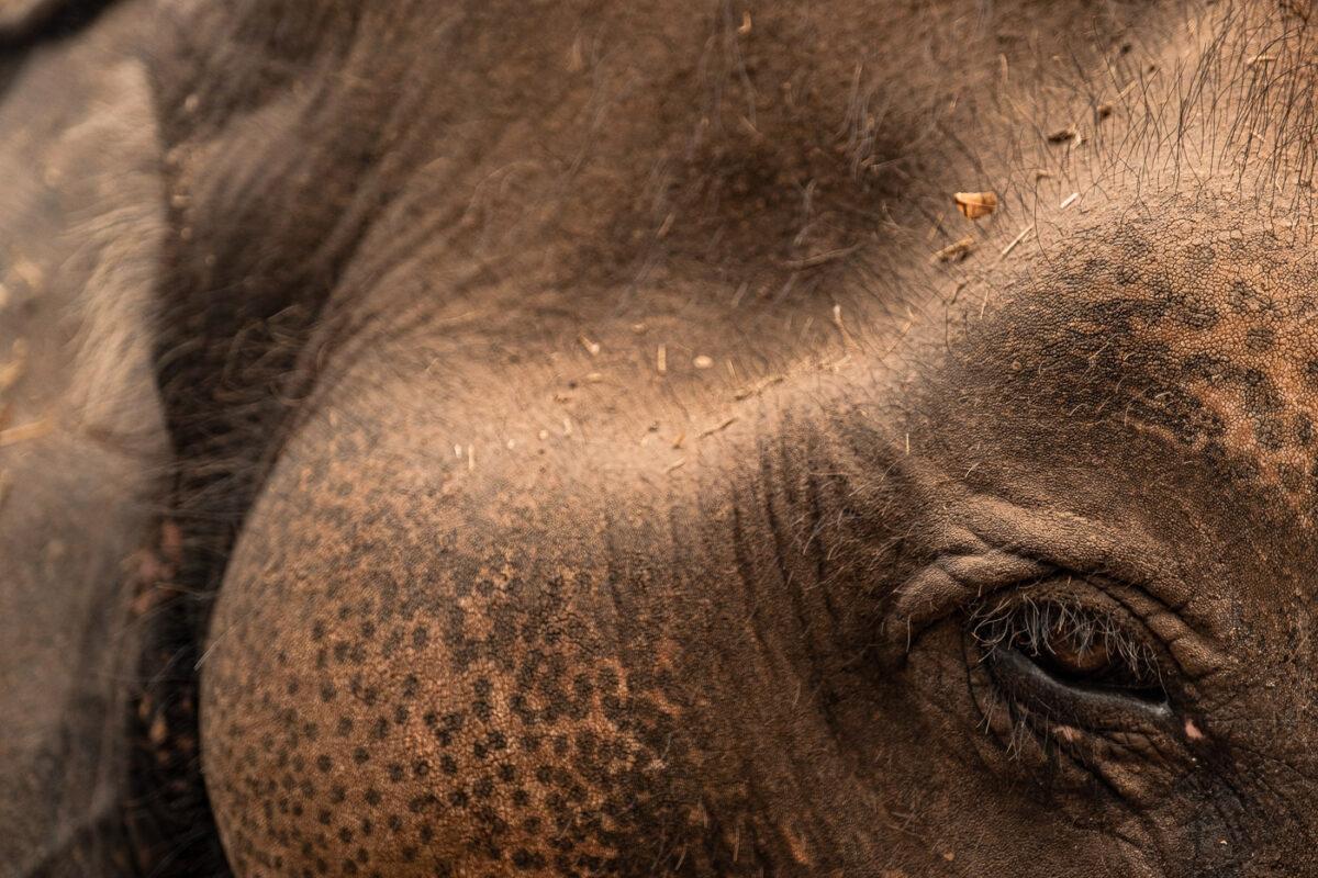 Elephant Laos blog de voyage asie du sud est