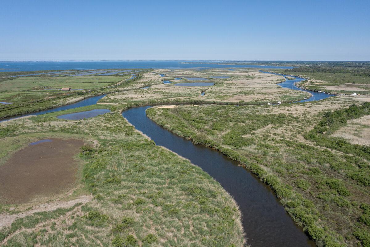 Réserve ornithologique du Teich Bassin d'Arcachon