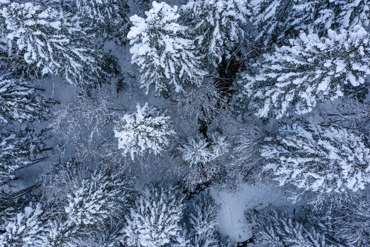 survol de sapins enneigés avec le drone