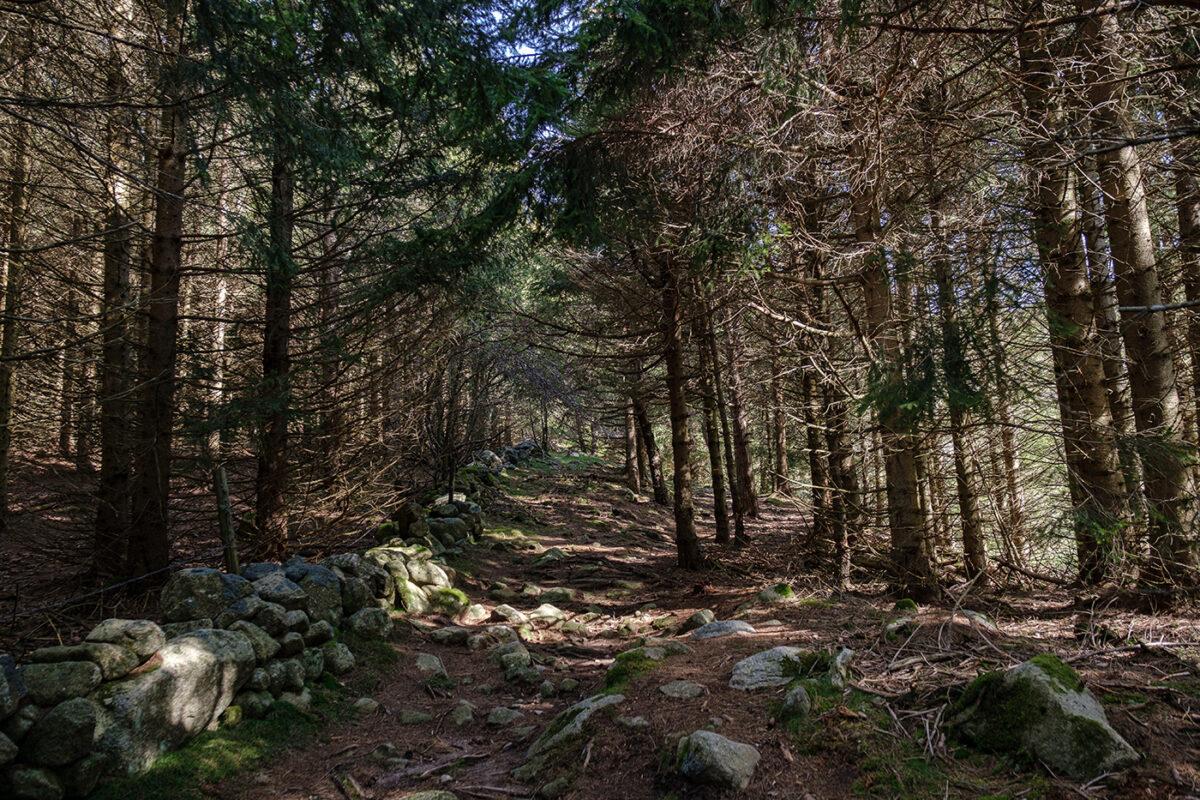 Forêt Finiels en direction du Mont Lozère