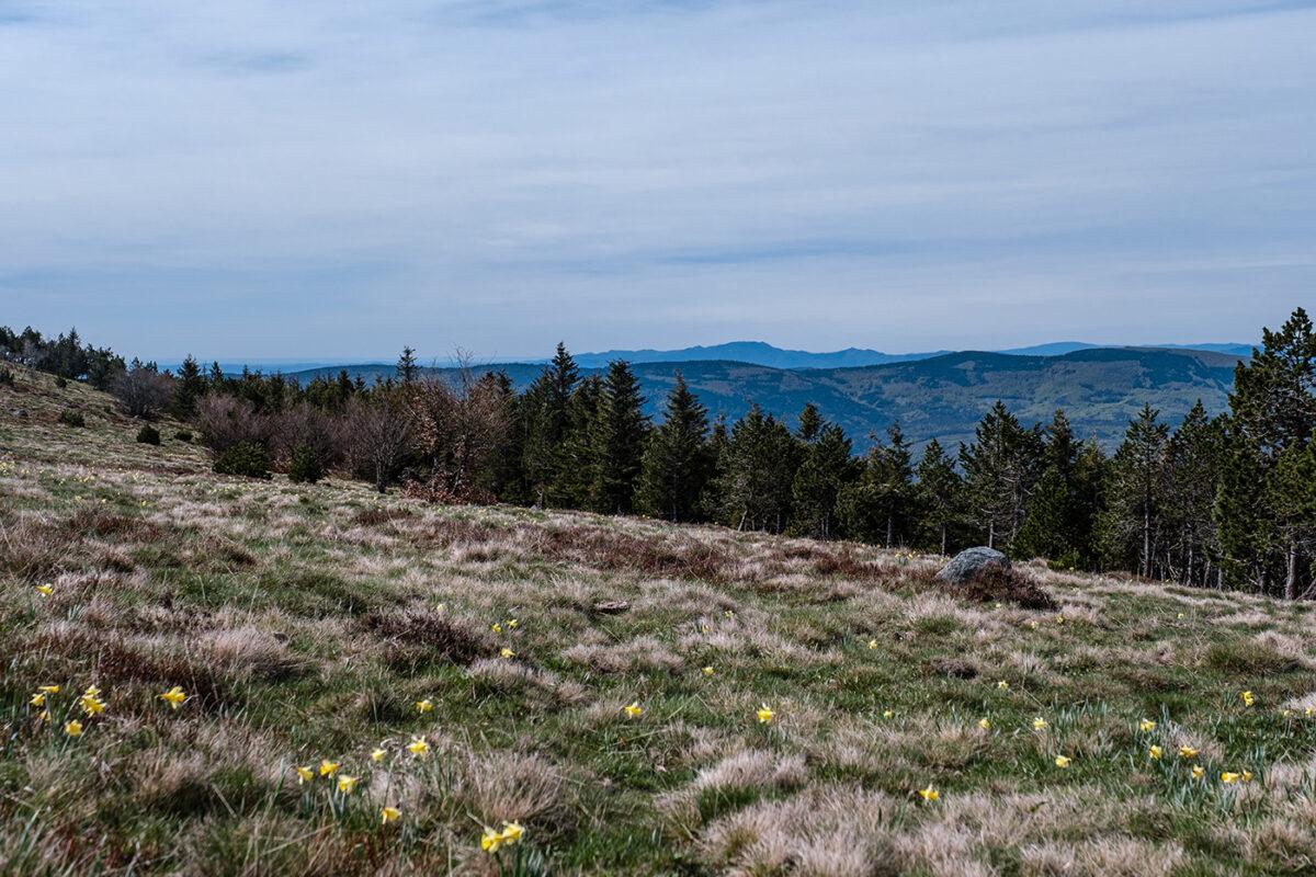 Plateau du Mont Lozère sommet de Finiels randonnée