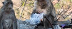 Gestes écologiques au quotidien : l'importance de réduire ses déchets